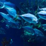 Medio ambiente en tiempos de pandemia